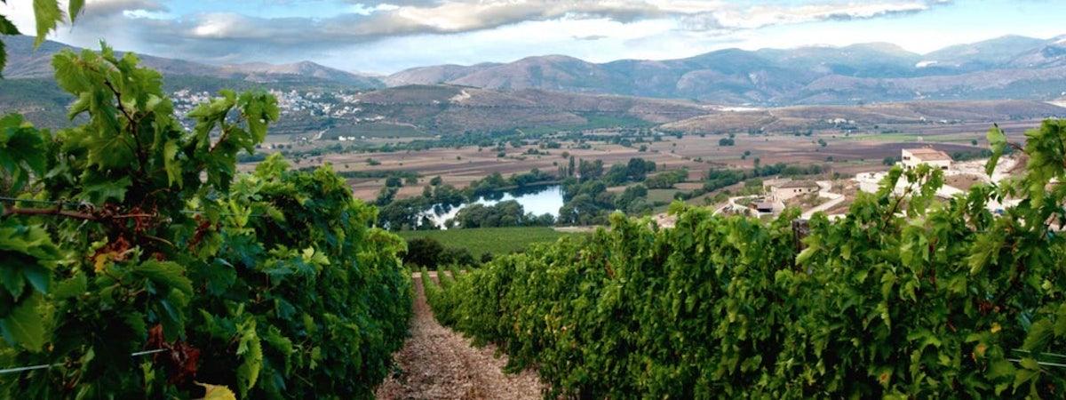 Foto bij Pasetti Vini