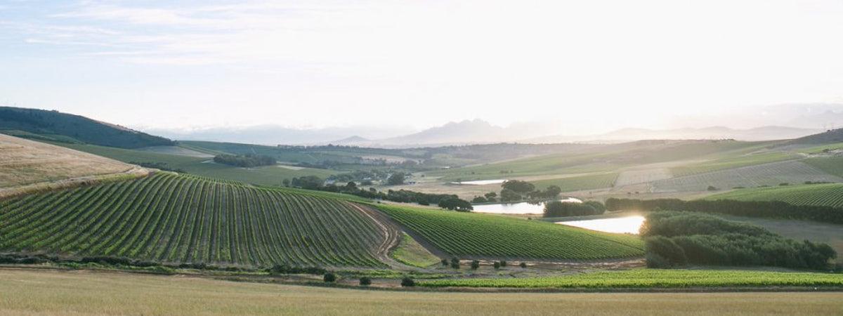 Foto bij Maastricht Wines