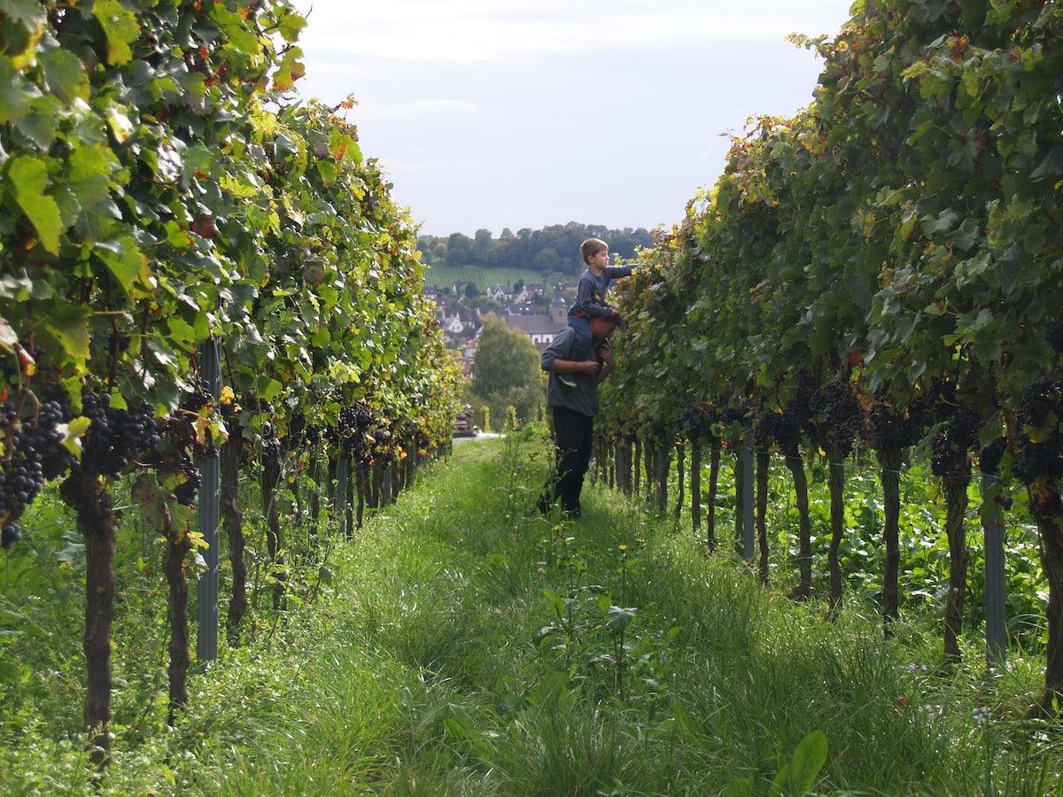 Afbeelding bij Wijnpakket biologisch