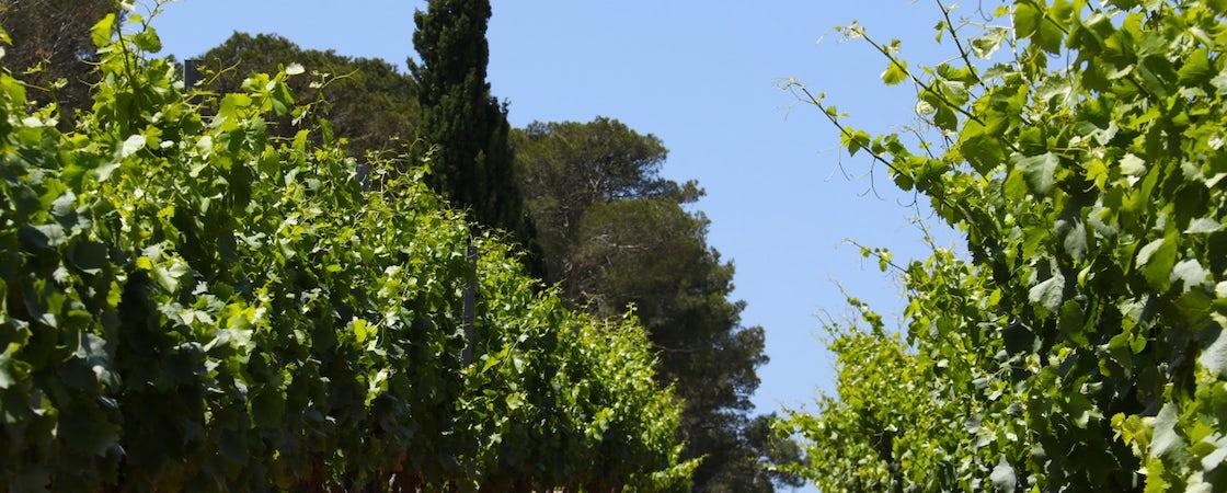 Foto bij Domaine de la Navicelle