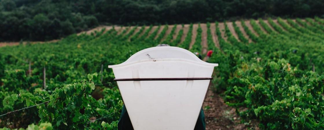 Foto bij Domaine de Cazaban, Cabardès
