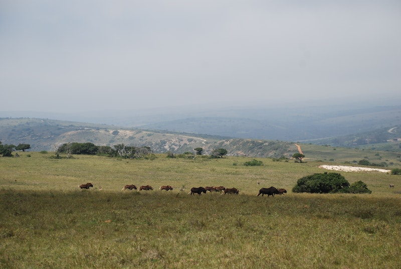 Amakhala Private Game Reserve