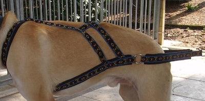 x-back Wheeldog Harnas
