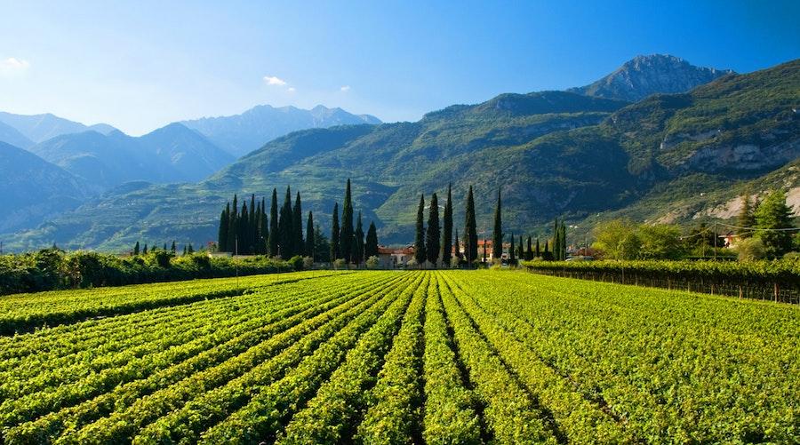Wijngebieden bij Alto Adige