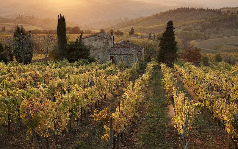 Wijngaard in Toscane