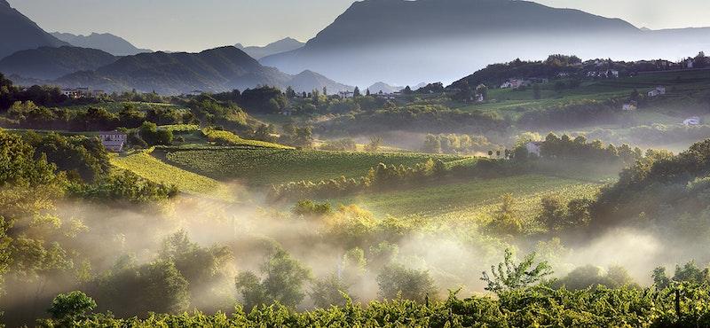 Wijngaard in Vento