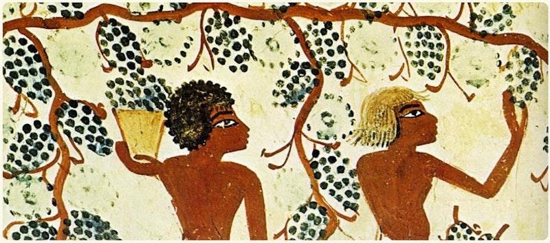 Wijn maken doen ze in Italië al erg lang
